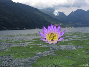 Water Lily Invasion – Tamiko Thiel